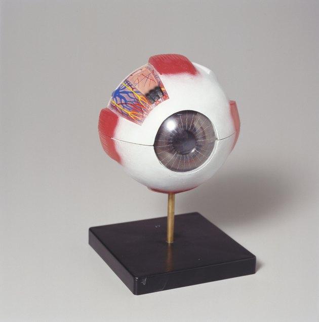 Medical eye model
