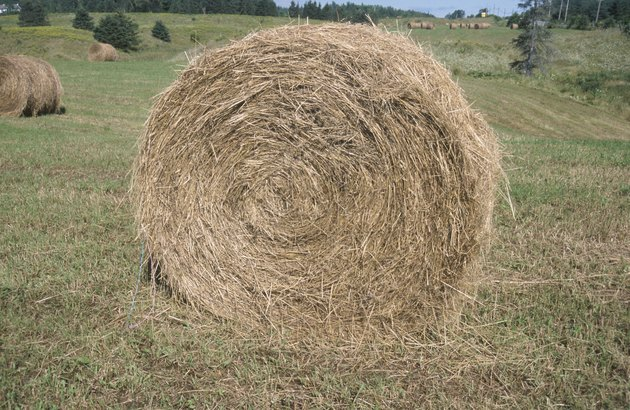 Hay bales in pasture