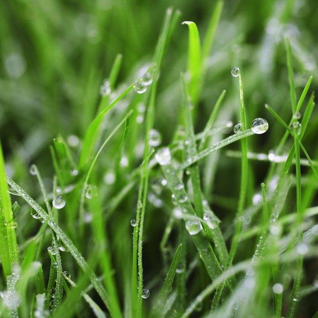 Grass wet with dew