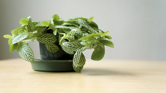 Green plant on wooden table
