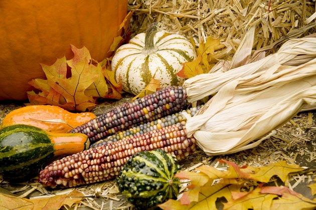 Indian corn, gourds, and pumpkins