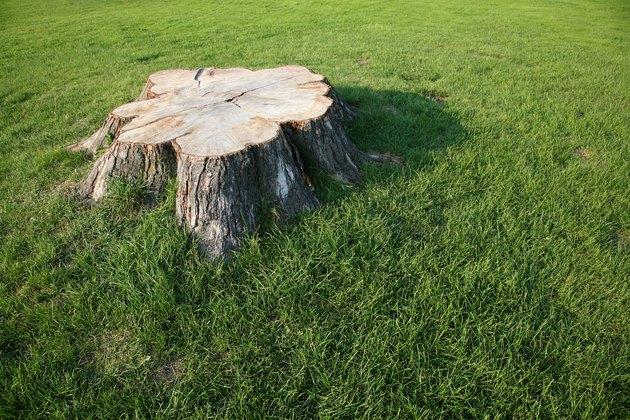 Stump in lawn