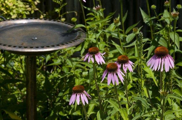 Cornflowers And Birdbath