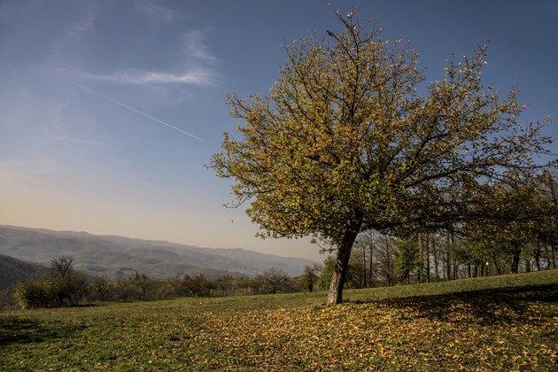 Apple tree in autumn sunny day