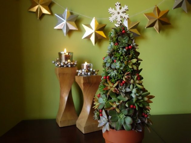 Succulent Christmas Tree in front of a green wall