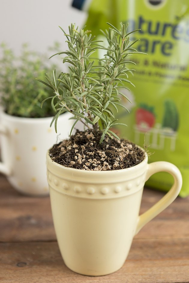 Planted rosemary in mug.