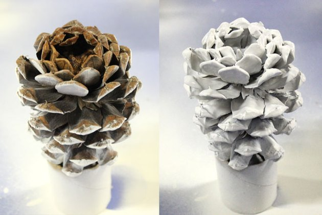 primed pine cone