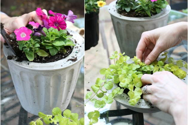 Potting plants in cement containers