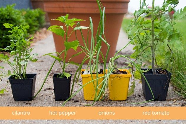 Selecting plants