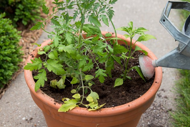 Watering the container garden