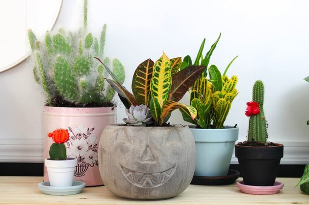 A concrete pumpkin planter surrounded by cacti in assorted containers