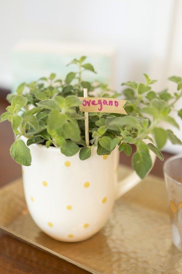 Teacup herb garden.