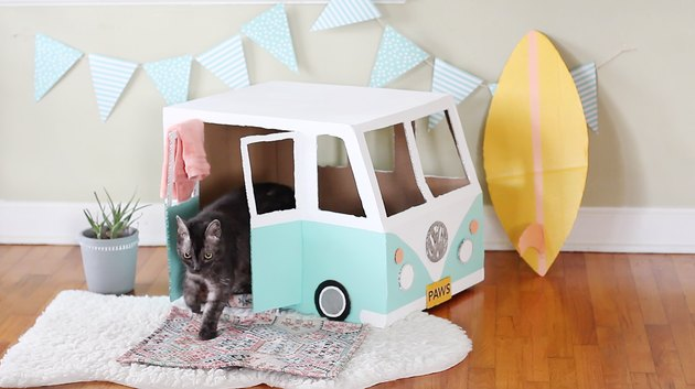 Cat walking out of VW bus