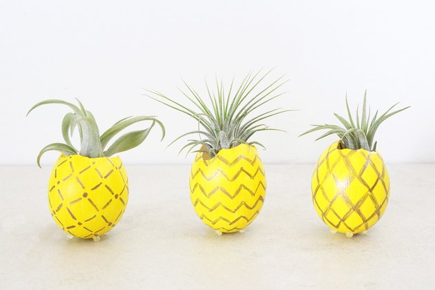 Pineapple air plant holders
