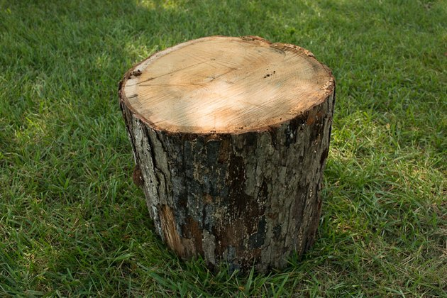 Place a tree stump in the upright position.