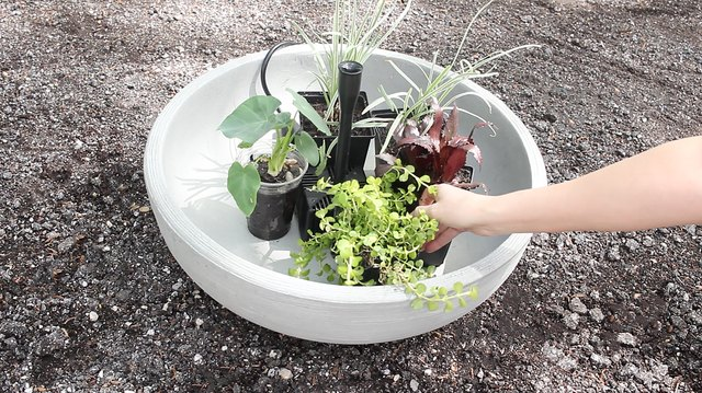 Placing water plants inside container