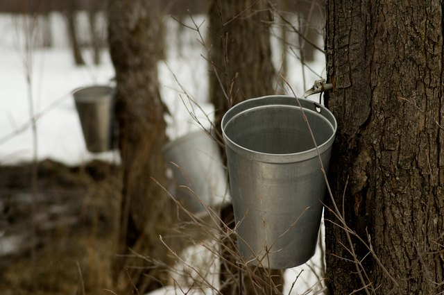 Maple sugaring in New England