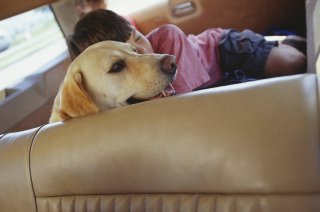 Girl (6-7) sleeping with dog in rear of station wagon