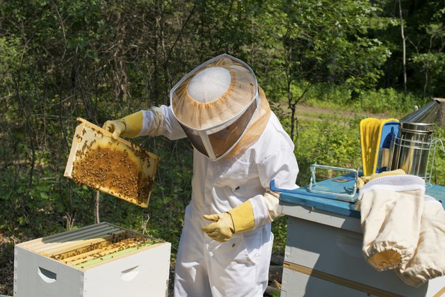 Inspecting Beehives