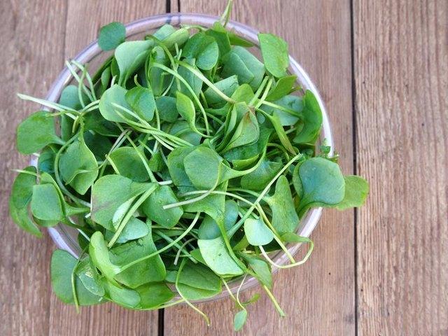 Fresh watercress ready for salad preparation