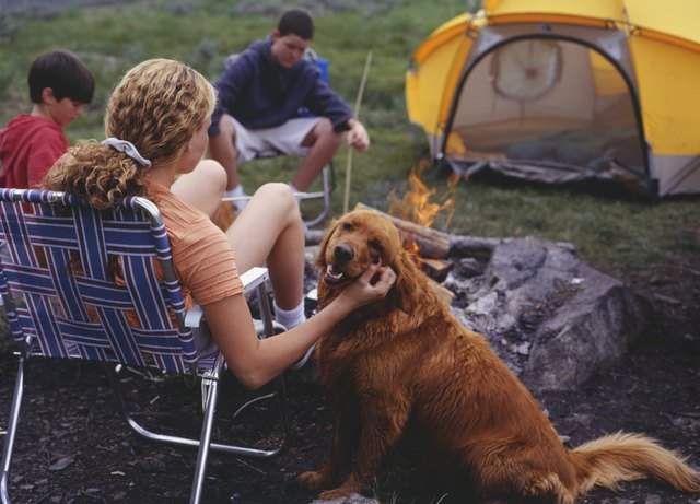 Mother and two sons (13-14) (10-11) sitting at campsite, woman stroking dog