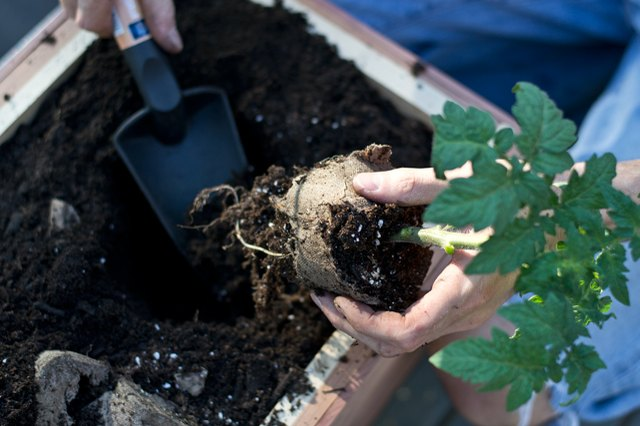 Plant vegetables.