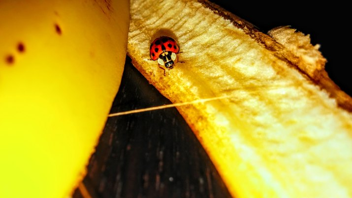 Close-Up Of Insect On Banana Peel