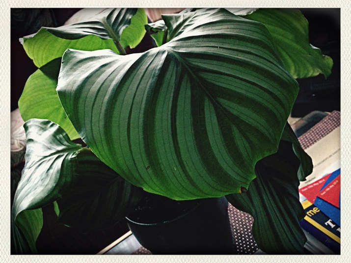 Close-Up Of House Plant