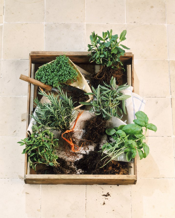 Herbal plants in carton, close-up