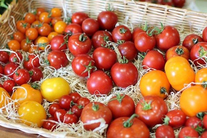 Choosing tomatoes