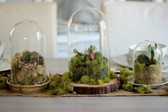 Learn how to build a terrarium
